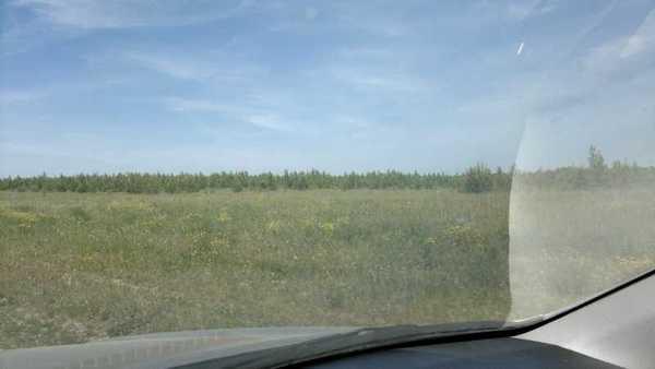 Зарастающее лесом поле